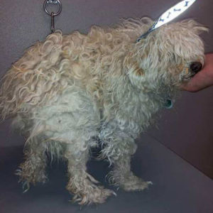 how to get burdocks out of dog hair